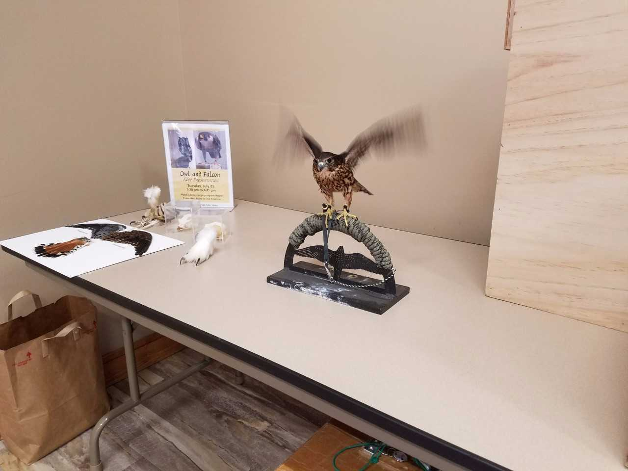 'Owl and Falcon' Program